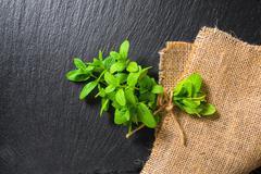 Beautiful bunch fresh green lemon mint tied twine on slate and burlape backgr Stock Photos