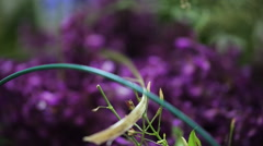 Beautiful violet flowers lie on table decorated with asparagus branches Stock Footage