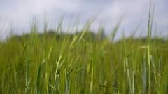 Beautiful Nature of Bali - Ubud Green Rice Field Stock Footage