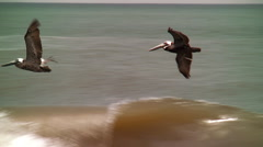 Trio pelicans skim the crashing waves Stock Footage