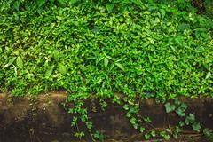Green botany background - stock photo