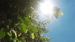 Sunlight beaming through green deciduous tree branches and leaves - stock footage