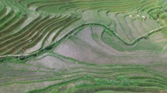 LOW AERIAL FLY OVER JINKENG RICE TERRACES IN TIANTOUZHAI VILLAGE Stock Footage