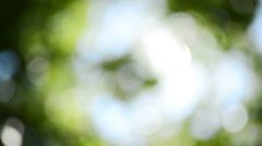 Out of focus green deciduous treetop with sunlight beaming - stock footage