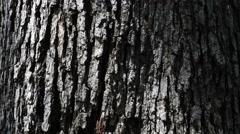 Tree Trunk 4K Macro Pan Up Stock Footage