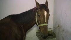 Footage of a Horse, At Görüntüleri Stock Footage