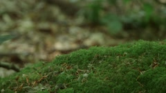 Close up on moss rack focus to dead leaves Stock Footage