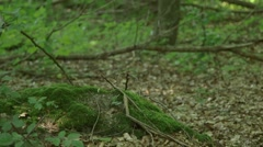 Rackfocus from moss to rotten branch Stock Footage