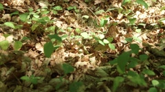 Pan over forrest floor with wind moving Stock Footage