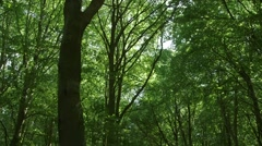LR Pan over forest canopy Stock Footage