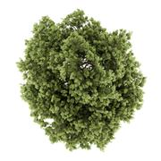 top view of common ash tree isolated on white background. 3d illustration - stock illustration
