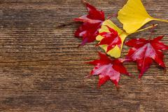 Fall leaves on wooden background Stock Photos