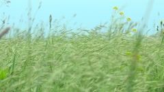 Spring grass in the steppe Stock Footage