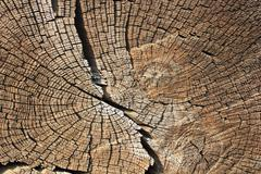 Cross section on wood, texture of annual rings Stock Photos