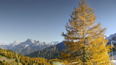 Yellow larch tree in autumnal landscape - stock footage