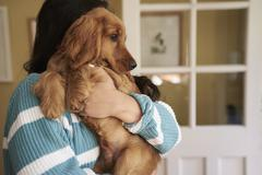 Cocker Spaniel Owner Standing And Cuddling Dog Stock Photos