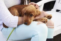 Close Up Of Cocker Spaniel Owner Cuddling Dog After Walk Stock Photos