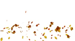 Windy Falling Autumn Leaves on white Stock Footage