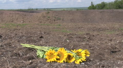Sunflowers at the crashsite of MH17 in the Ukraine  Stock Footage