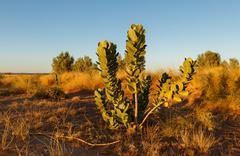 Green shrub in the Sahara Stock Photos