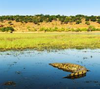 Alligator on Chobe River Stock Photos