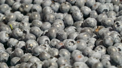 PLenty of bilberry fruit on the display Stock Footage
