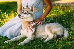 Little Girl And Her Dog Husky In Summer Park Stock Photos