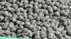 Lots of bilberries on the green basket Stock Footage