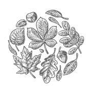 Set leaf. Vector vintage engraved illustration - stock illustration