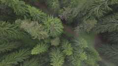 A top-down shot of a patch of trees Stock Footage
