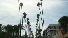 Los angeles famous street view palm tree alley road trip panorama 4k usa Stock Footage