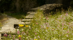 Wild flowers at an old village, France Stock Footage