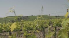 Senior couple visiting vineyard Stock Footage