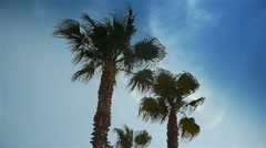 Palm trees at Cote D'Azur France Stock Footage