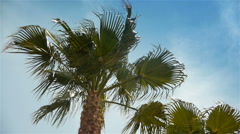 Waving palm trees at Cote D'Azur France Stock Footage