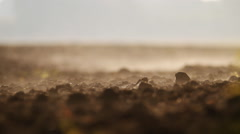 the plowed field. Morning vapor over the land. close up - stock footage
