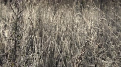 Grass bent meadow with mild frost shining in morning sun. 4K Stock Footage