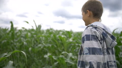 Boy walks through a field of tall corn plants, slow motion Stock Footage