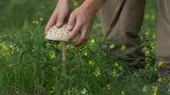 Man picking parasol mushroom (no color grading) Stock Footage