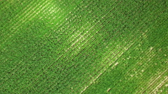 UHD Cereal fields aerial shot Stock Footage