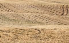 Agricultural field, cereals Stock Photos