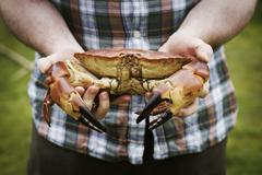 Close up of a chef holding a fresh crab in his hands. Stock Photos