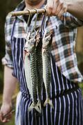 Chef holding three Mackerel hanging on hooks. Stock Photos