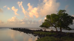 Tree silhouetted against evening clouds ,Mauritius Stock Footage