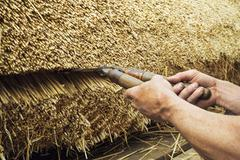 Close up of a thatcher trimming straw of a thatched roof with shears. Stock Photos