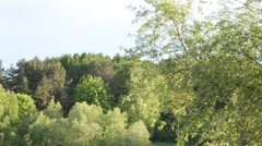 Forest and river.Wonderfull nature in Ukrainde Stock Footage
