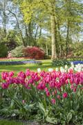 Spring flower beds with tulips (Tulipa) in a park Stock Photos