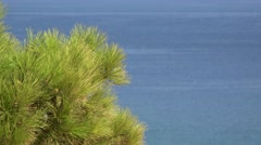 Green branch of pine tree and blue sea in background Stock Footage