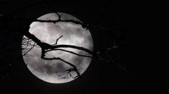Full Moon Rising Georgia Stock Footage