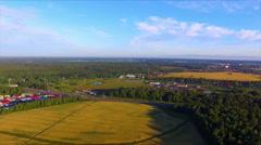 Drone flight over the ripe rye ears field Stock Footage